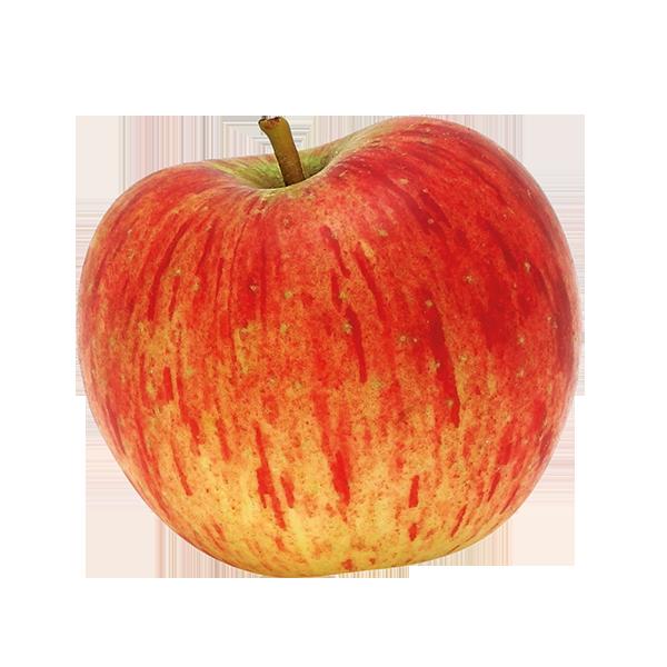 Pomme Reine des reinettes Fr. BIO (petit calibre 80 g et +)