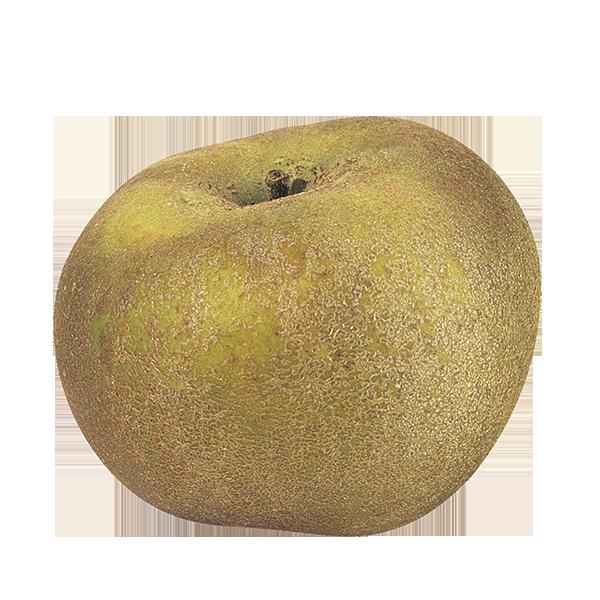Pomme grise du Canada BIO (calibre moyen 115 g et +)