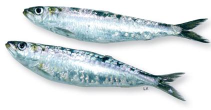 Sardines entières (x 2, environ 100 g)