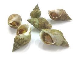 Bulots cuits (250 g)
