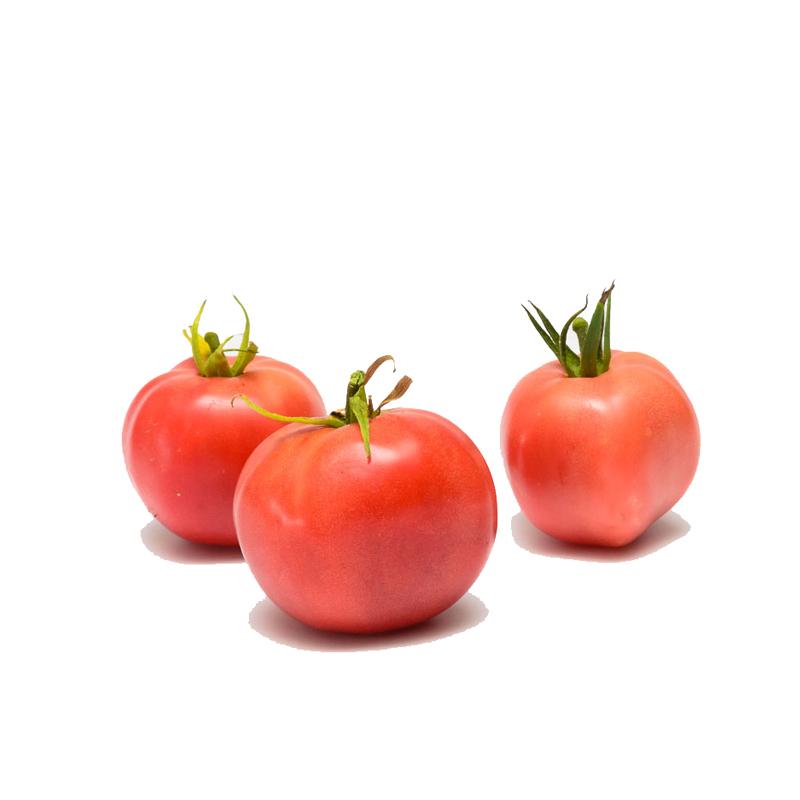 Tomate ancienne ronde Rose de Berne Fr. BIO