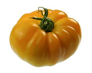Tomate ancienne côtelée jaune Ananas Fr. BIO